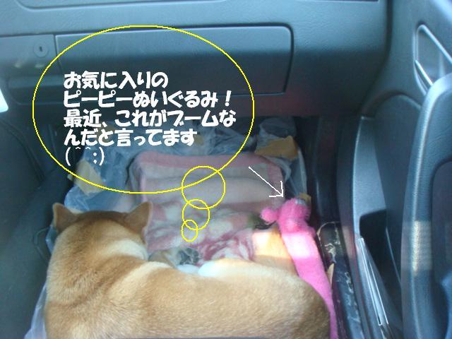 DSC07379ー編集