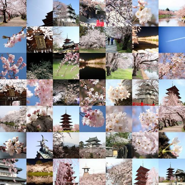 2009 弘前 桜 コラージュ Picasa2