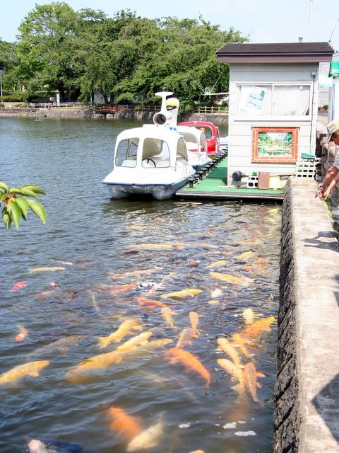 猿賀神社 鯉のえさ