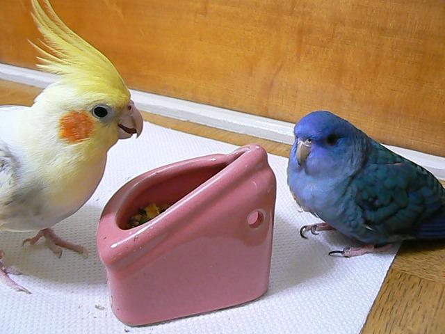 陶器の餌入れ