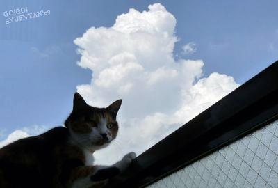 猫と入道雲