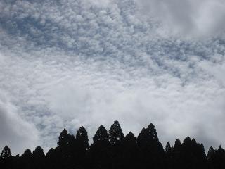 2011101-2生杉 006