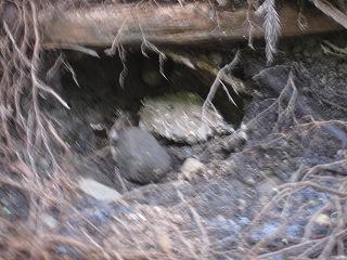 2011108-10生杉 044