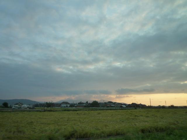 2:稲が倒れた田んぼ