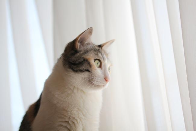 katenmaemika1.jpg