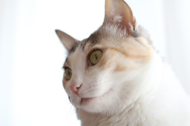 katenmaemika2.jpg