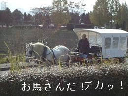 DSC03249.jpg