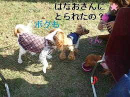 DSC03284.jpg
