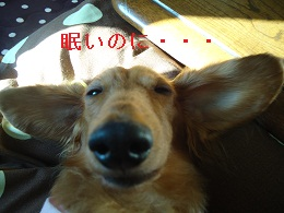 DSC03373.jpg