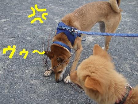 2009_0908_3.jpg
