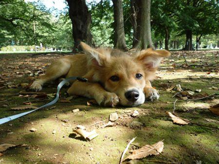 2009_0919_naru_3.jpg