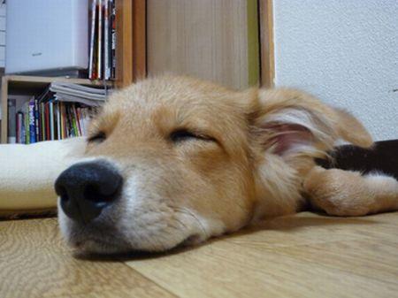 2009_0919_naru_7.jpg