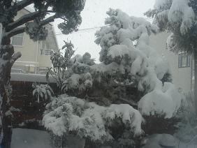 120125雪景色1