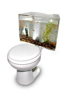 金魚トイレ