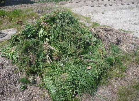 刈り草の山