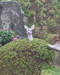 奈良といえば…