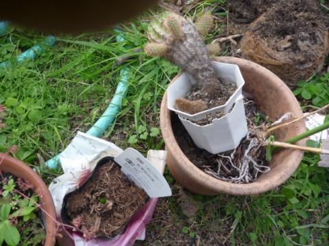 無残な鉢植え