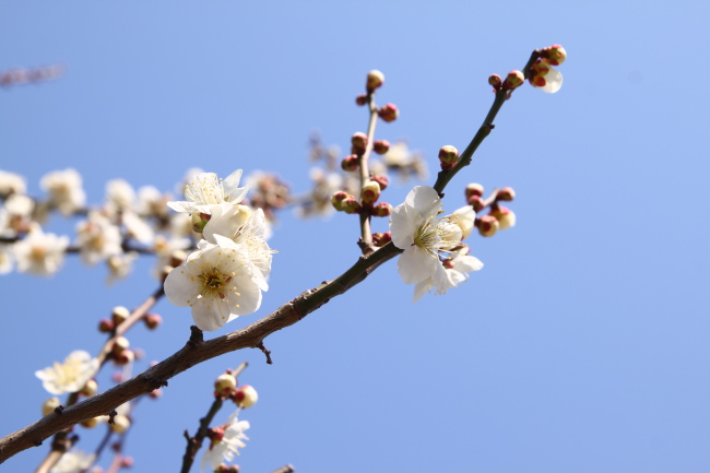 20110227山田富士公園2