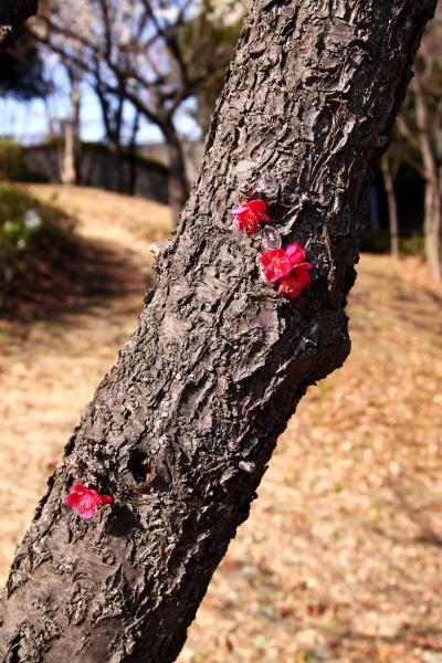 20110227山田富士公園