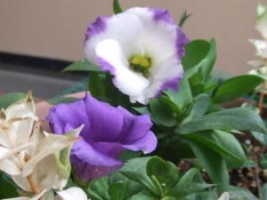 flowertoru.jpg