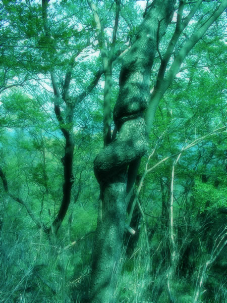 森にすむ大蛇