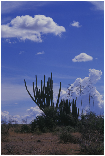 メキシコの空