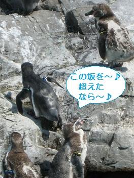 葛西臨海水族園のペンギン2008