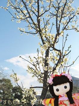 小さな木です