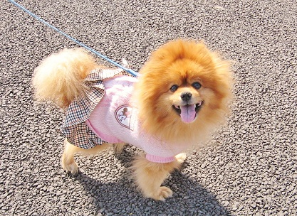下町のブサカワ犬