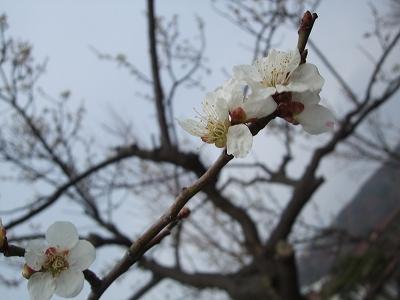 2011_04_11_0010.jpg