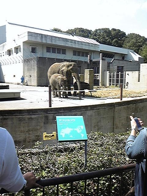 09'どうやぶり とべ動物園 ぞう親子