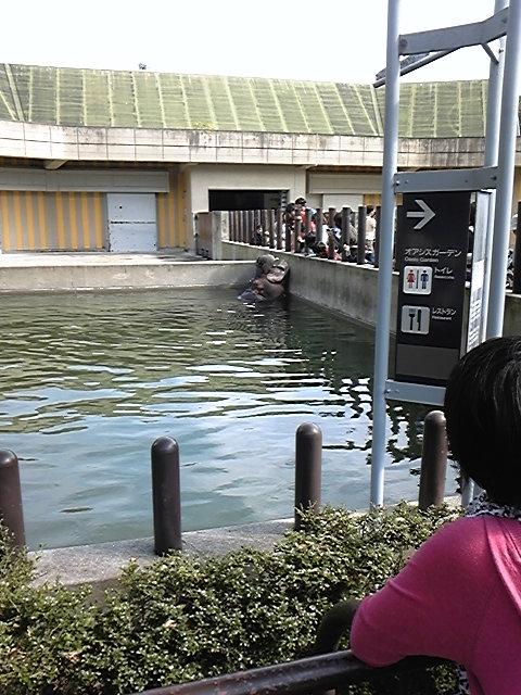 09'どうやぶり とべ動物園 かば