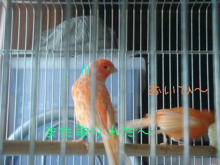8_convert_20090926170208.jpg