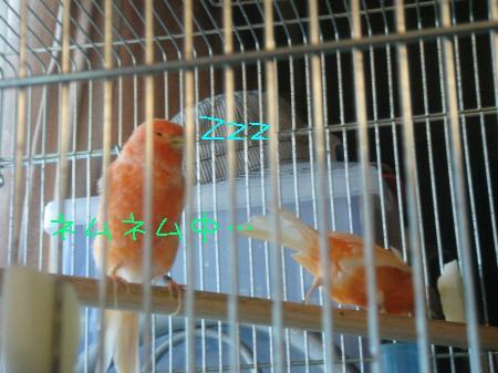 DSC03060_convert_20091001160058.jpg