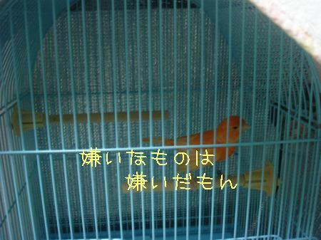 DSC03091_convert_20091022191256.jpg
