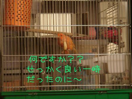 DSC03109_convert_20091023181758.jpg