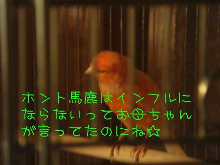 tori2_convert_20090925194600.jpg