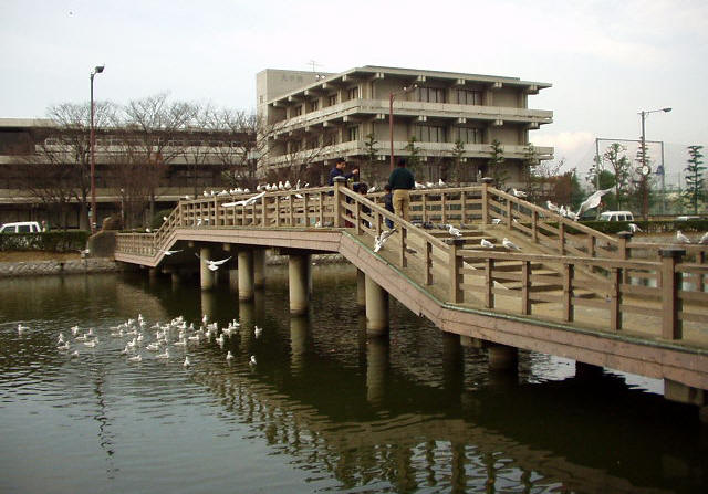 みその橋1