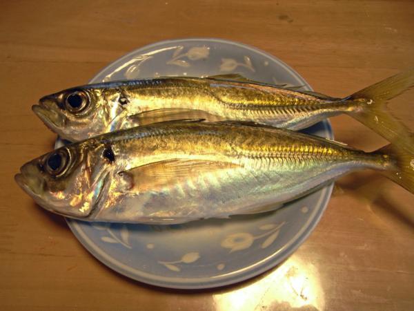 20120219釣り05
