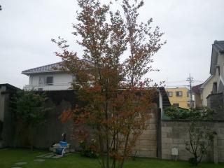 2011-10-15 11.20.44