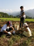 長野イモ掘り2