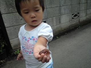 蝉の抜け殻とののたん