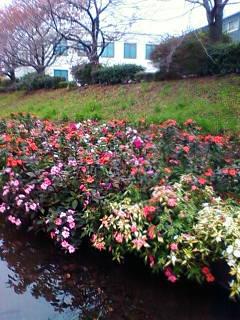 20111129花