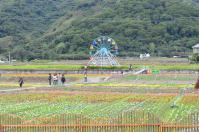 台東關山のお花畑の観覧車
