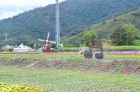 台東關山のお花畑で風車と音符オブジェ