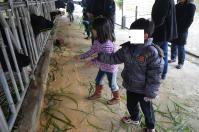 台東初鹿牧場は牛に牧草をあげられます