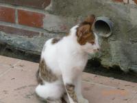 東山SAの猫1