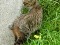 東山SAの猫2