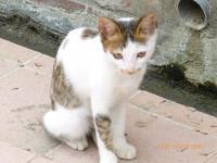 東山SAの猫3