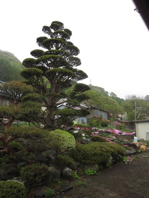 鴇久保・小林邸の庭1